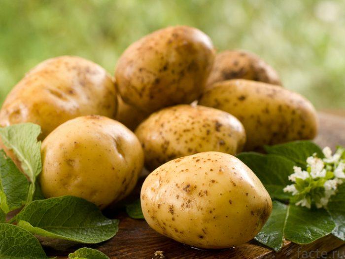 Картофель – частый продукт на кухне. Полезен ли он?