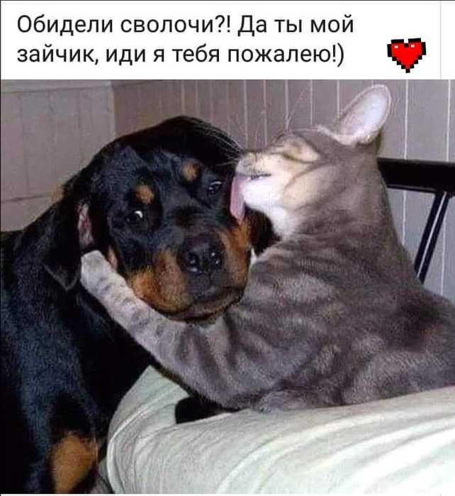 Братики наши меньшие... животные,позитив