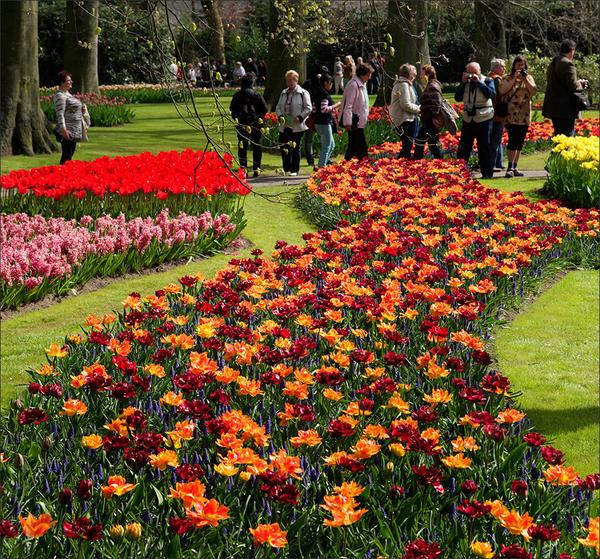 Парад цветов в парке Кёкенхо…