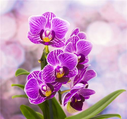 Перекись водорода - лучшее удобрение для орхидей