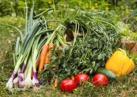Хороший урожай с удобрением CropForce