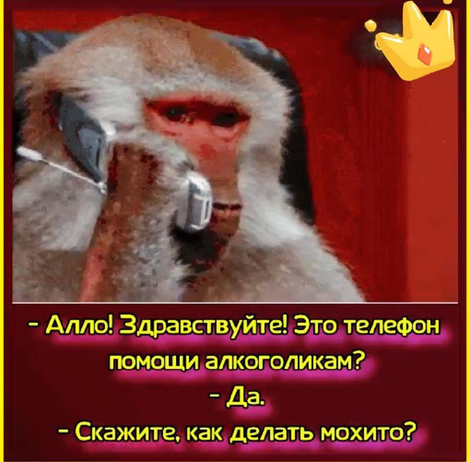 Парень пишет девушке в аське: - Как твой попугайчик поживает?... Весёлые,прикольные и забавные фотки и картинки,А так же анекдоты и приятное общение