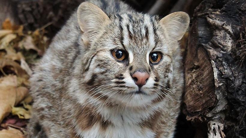 Питомник Московского зоопарка в Подмосковье откроется для туристов 2 апреля