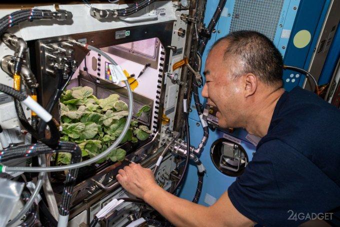 Первый урожай редиса собран на МКС будущее,видео,наука,Россия,технологии