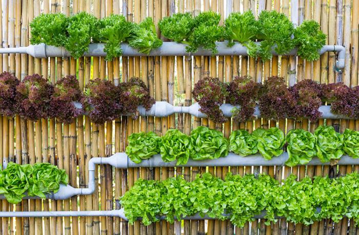 Идеальный вариант для выращивания салата.