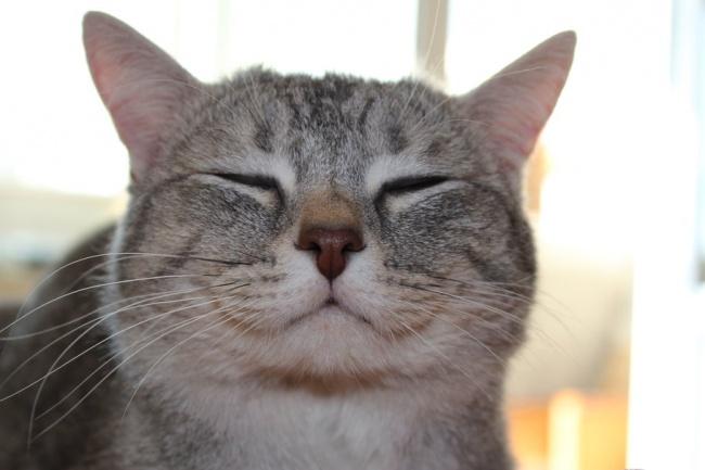 12 очевидных признаков того, что ваш кот без ума от вас