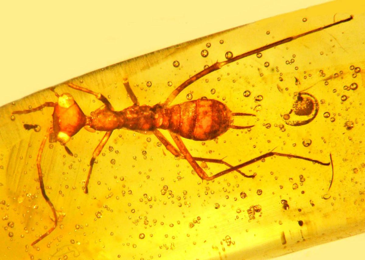 """В янтаре найдено древнее насекомое с """"инопланетной"""" формой головы"""