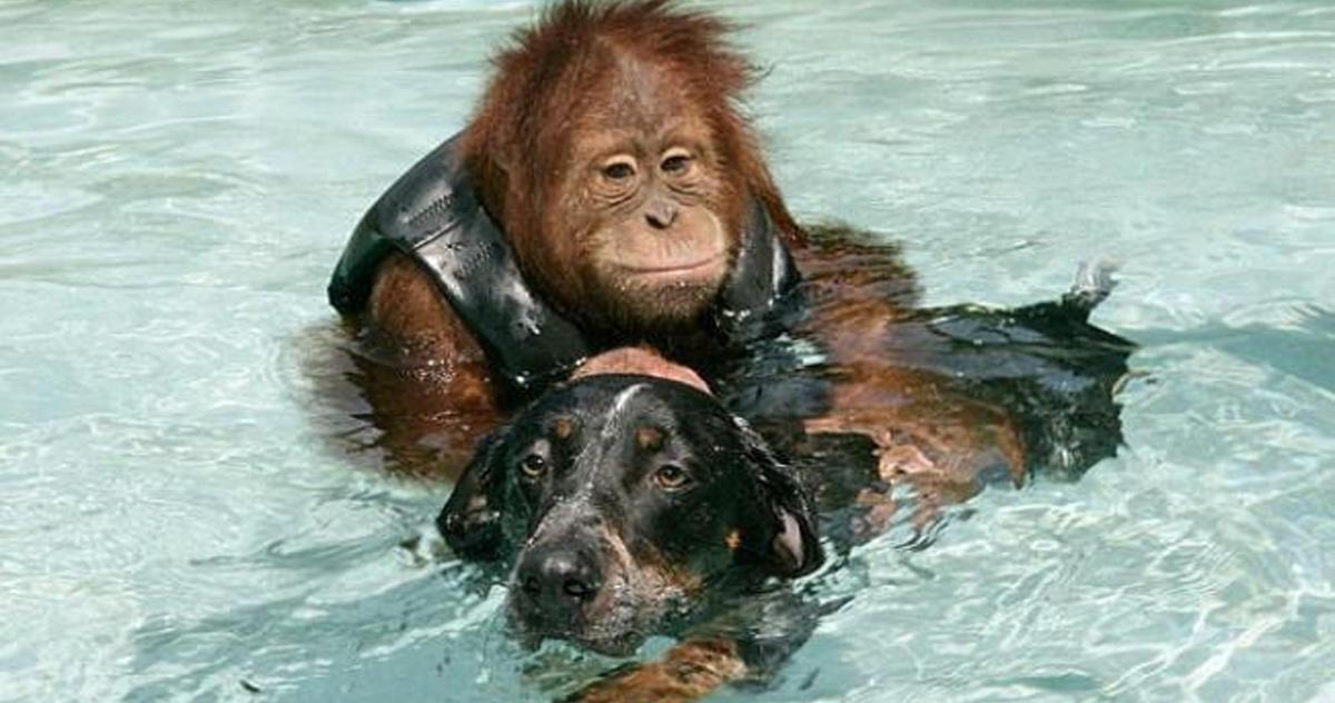 11 реальных историй, которые НАВСЕГДА изменят ваше отношение к животным