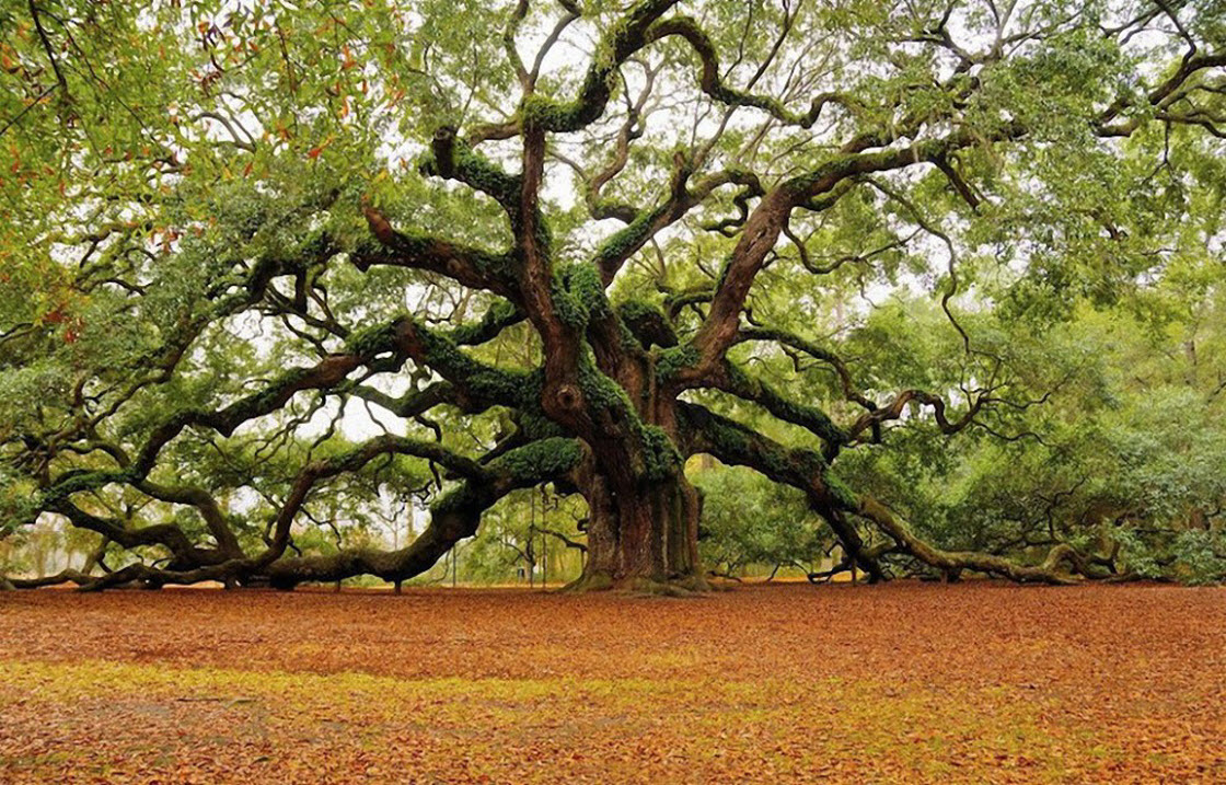 Шикарное дерево картинки