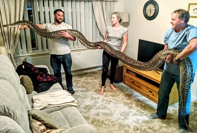 Британец держит пятиметрового питона у себя дома