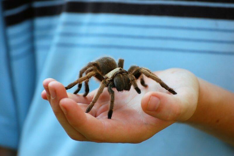 Зять решил избавиться от тёщи с помощью паука