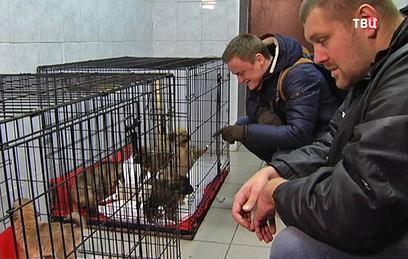 Родившей в метро собаке и ее щенкам нашли хозяев