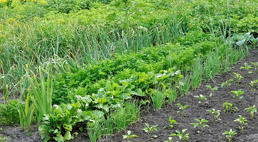 Лучшие идеи для грядок или как сделать, чтобы было удобно, стильно и долговечно грядки,дача,сад и огород