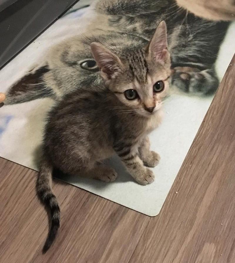 Крошечный чудо-котенок получил второй шанс на жизнь