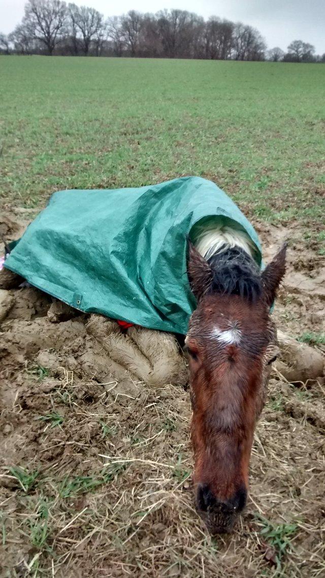 Больного жеребёнка вывезли в поле и оставили погибать!