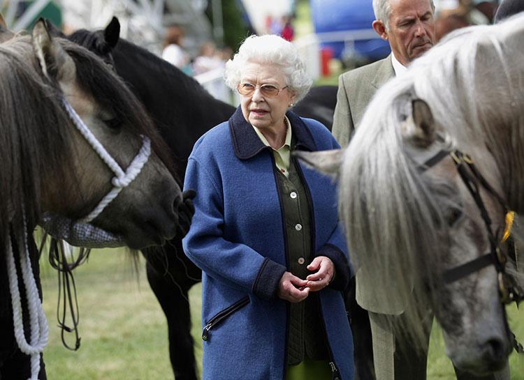 Погиб титулованный конь королевы Елизаветы II Монархи,Британские монархи