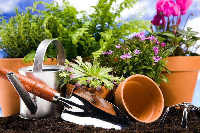 МИР РАСТЕНИЙ.Закон выращивания комнатных растений (6)