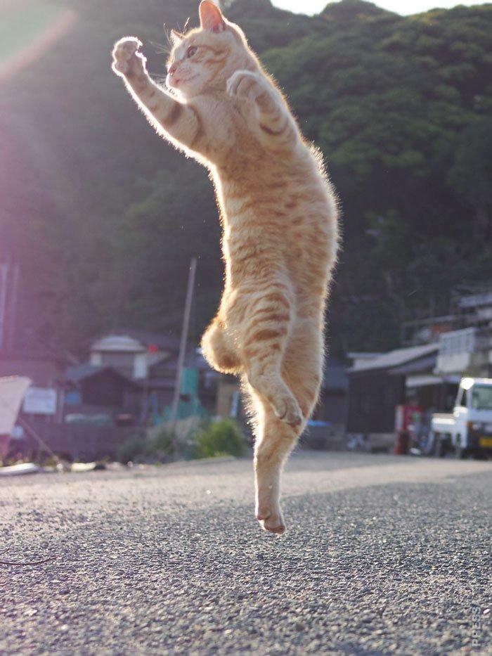 Картинки прыгающие кошки