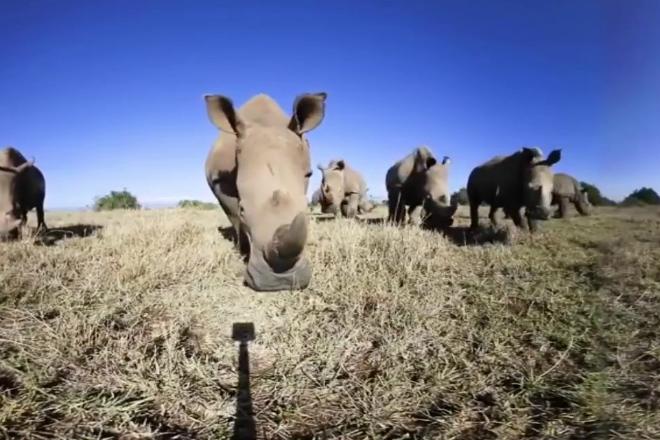Носорог в деле: 2 тонны веса против слона, буйвола и льва буйвол,животные,лев,носорог,Природа,Пространство,Слон