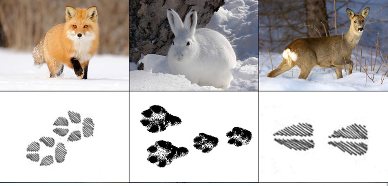 Весенние танцы животных картинки волокна отличаются