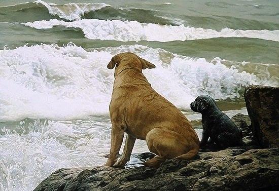 Собака – это вечное открытие