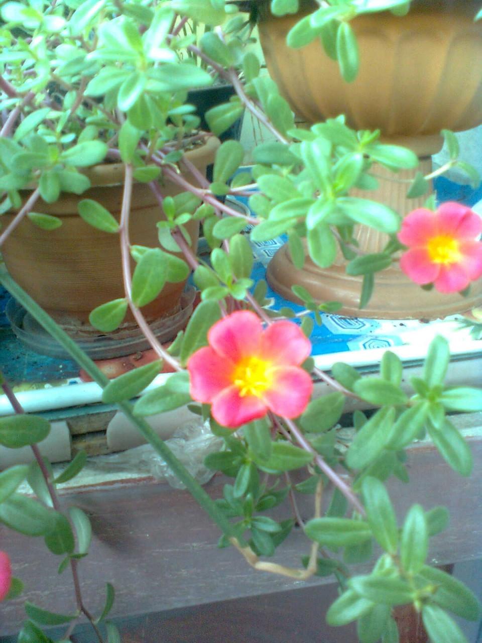 Подскажите, пожалуйста, название цветов.