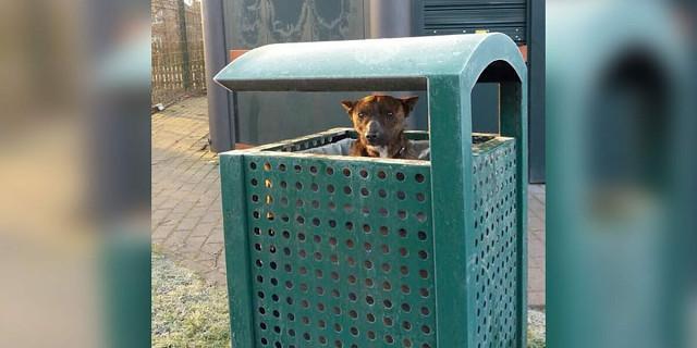 Собаку обнаружили в мусорном баке