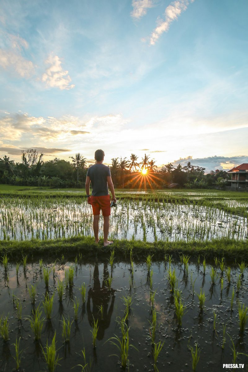 Сказочные пейзажи: рисовые террасы на Бали (14 фото)