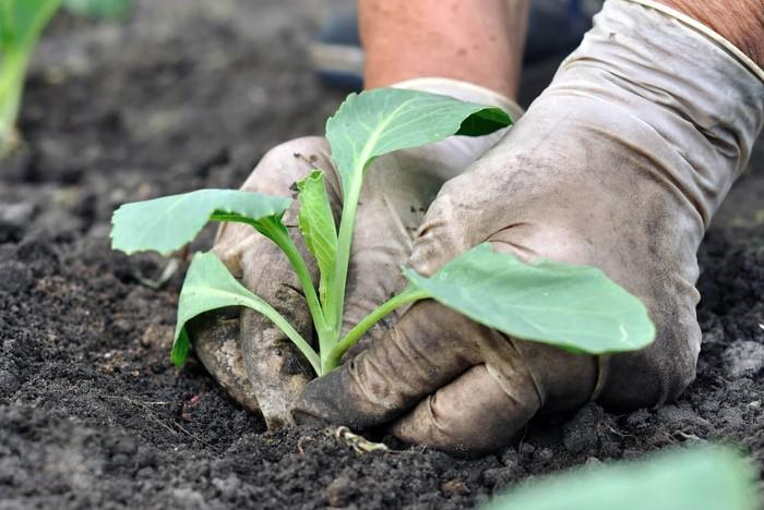 Цветы и овощи, которые еще можно успеть посадить на огороде в августе дача,полезные советы,сад и огород,урожай