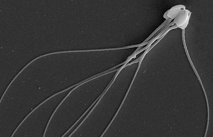 Выращено в лаборатории: сперма мышей.