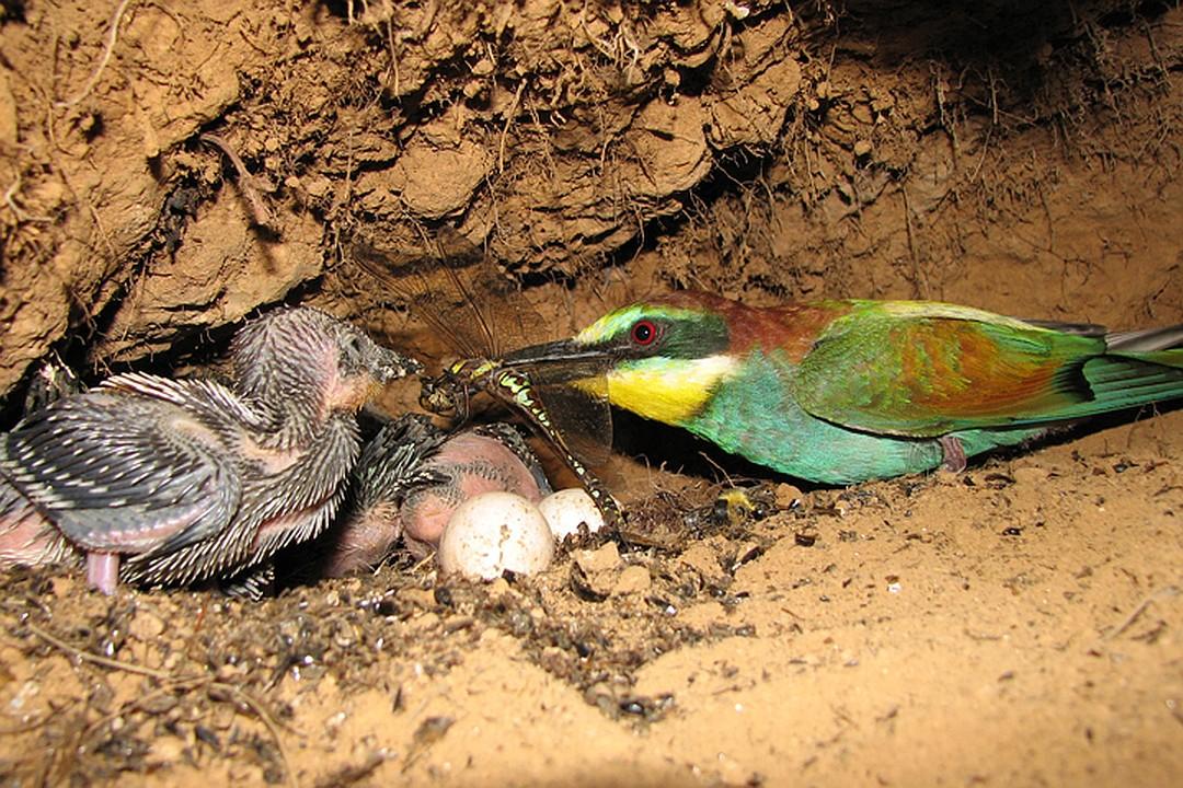 Нижегородскому орнитологу удалось сфотографировать редких птиц под землей