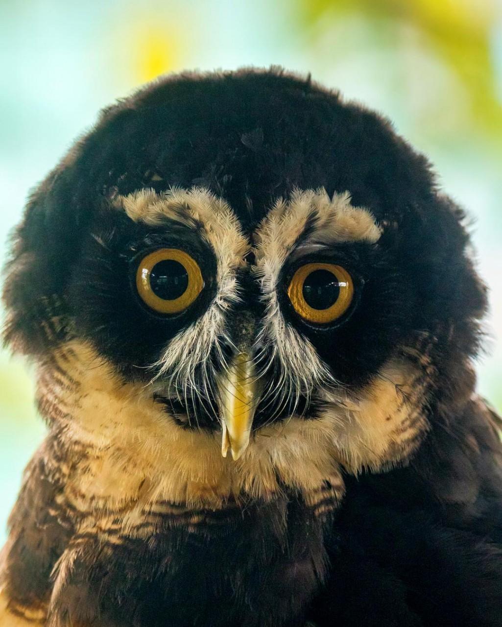 Красивые фотографии птиц Шона Грассера