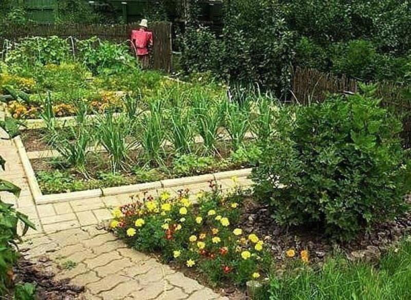 Сода, соль, кефир и дрожжи пригодятся в огороде! домашний очаг,идеи для дачи,мастерство,своими руками,умелые руки