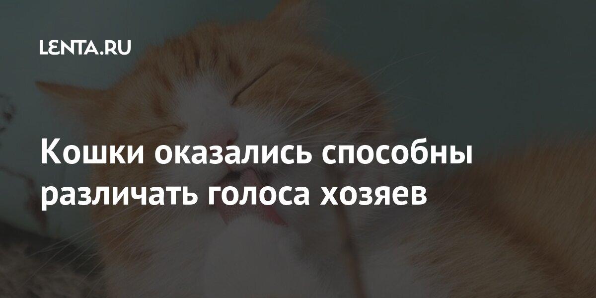 Кошки оказались способны различать голоса хозяев Из жизни