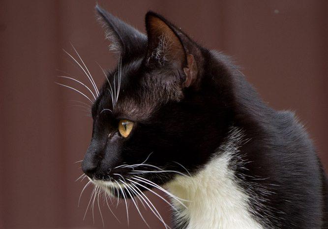 Как найти общий язык с котом? Самый полный разговорник сигналов, которые подают нам наши любимцы