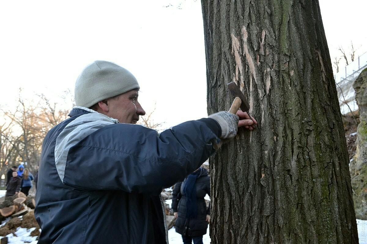 Вот зачем забивают гвозди в дерево