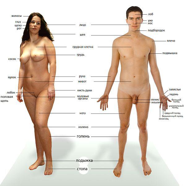 20 шокирующих фактов о нашем теле.