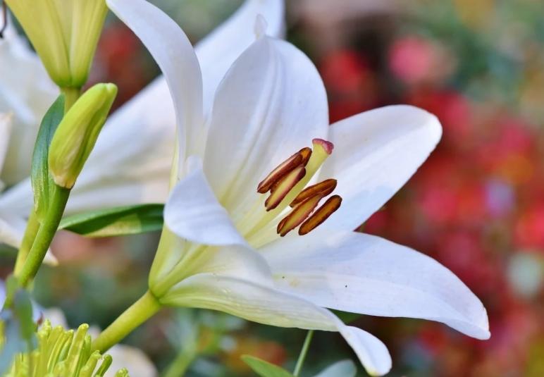 Уберите немедленно из дома эти пять растений – они губят здоровье