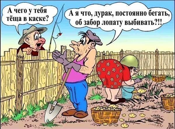 Картинки об огороде юмор