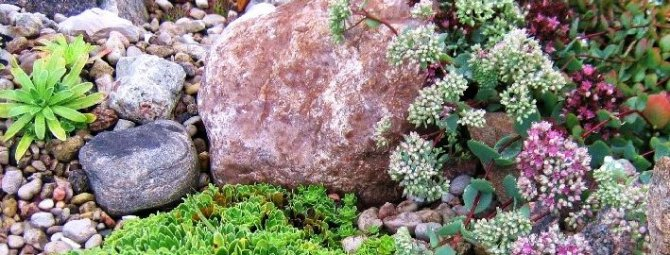 Рокарий своими руками: история моего каменистого садика с «альпийцами»