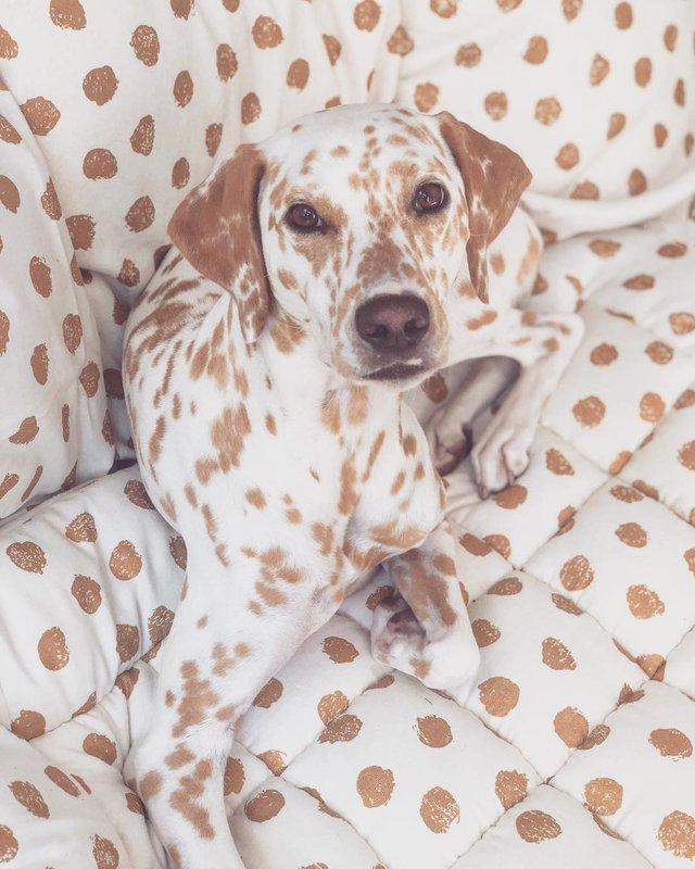 Эти 25 потешных собак гарантировано развеселят вас