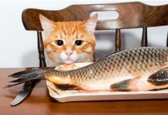 Трапеза кота Шарика юмор