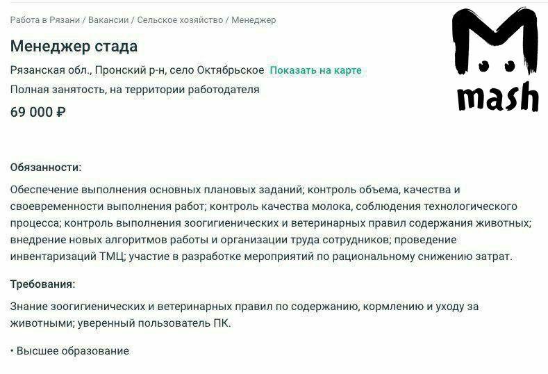 """В Рязанской области на вакансии доярок и скотоводов ищут """"менеджера стада"""" вакансии"""