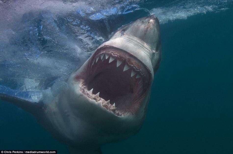 Картинки с акулами страшные, анимация днем