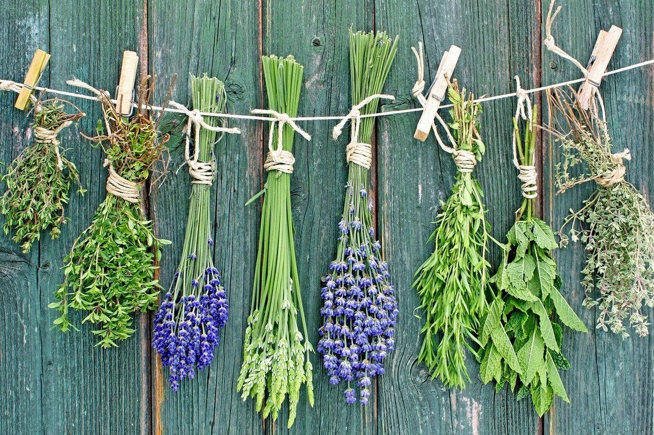 Как с помощью трав улучшить собственную жизнь. Советы шамана