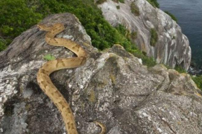 Змеиное логово: на острове человек не находился дольше двух часов альтернативная история,Кеймада-Гранди,опасный остров,остров,Пространство,Путешествия