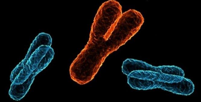 Вплоть до Евы: генеалогия человечества по женской линии генетика,история планеты,наука,человек