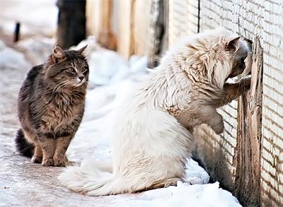 Поддержите петицию против замуровывания кошек в подвалах. Каждый ваш голос так важен.