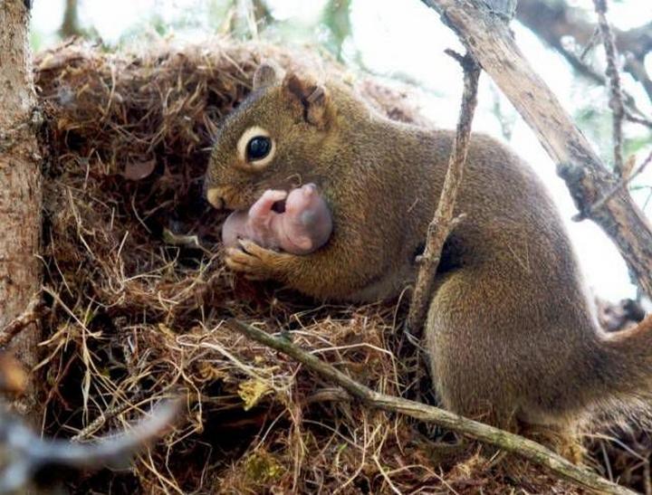 11 любопытных и совершенно очаровательных фактов о животных картинки