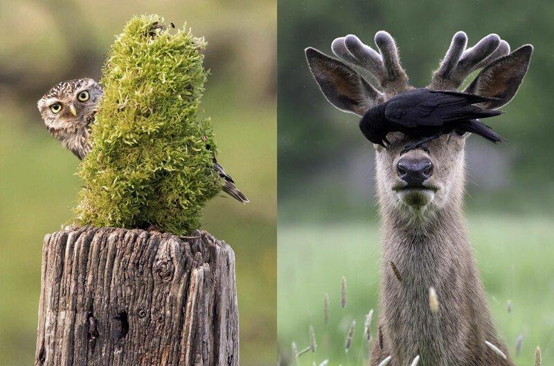 Животные, которые очень плохо играют в прятки природа